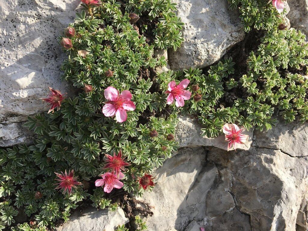 18.08.2018 Schönheit am Klettersteig